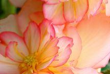 My secret garden dreams / by Rebecca Fanjoy