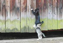 Awww Kittens / by Katherine