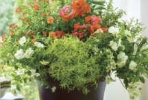 Southern Living Designer Series / by Southern Living Plant Collection