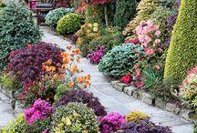 Secret Garden / by Cheryl Alman