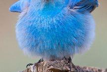 Birdies / by Veronica