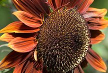 Flowers, Gardening, & Landscaping / by Michelle Billings