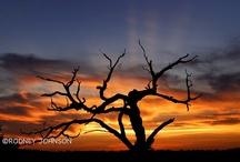 Texas~has my heart / by Lou Blanchard