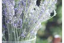 Gardening / by Maria Wahl
