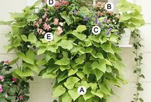 Gardening Fun ~ Boxes + Planters / Fab ideas for planting in the gardens, planters and window boxes! / by Donna Bell Knox