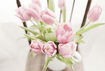 Tulipanes / by Ester Argemi Garriga