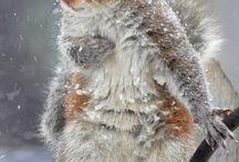 Squirrel / by Echo Symmons