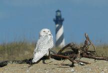 Dorky Owls / by Jeannette