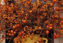 Fall Home Decor / by Aimee Shook