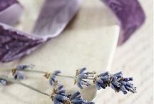 Lavender  |  Love /    / by pure wanilla