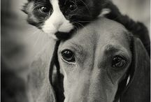 Cats & Dogs & Others / Just different pic's  / by Linda Schmidtke Mead