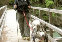 Bring the dog - Hiking/Camping / by Traci (Walk Simply)