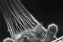 ♥ Cats by Akemi Photography / by Akemi Photography