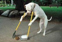 Dog Tricks, Training, and Treats / by Brittany Ruiz