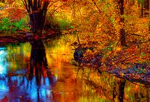 autumn colour / by Debi Lacey