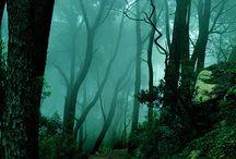 En el bosque / by N a c h o B a r c i a