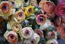 flowers / by Sharmadean Reid