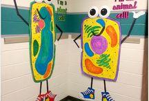 5th grade classroom + science / by Lauren Rank