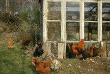 Gardening - Greenhouses / by Laurel Johnson