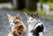 Kittys / by angie davis