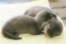 adorable animals!:) / by Caroline Ledet
