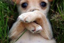 Too cute... / by Baiphen Quintessa