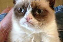 grumpy cat / by tony Gomez