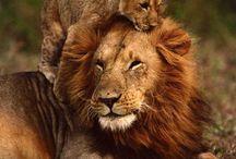wild animals africa / by Kathleen Hames