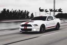 Mustangs  / by Herlon
