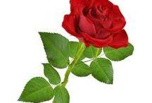 roses / by Leslie Ricken