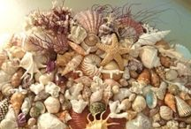 gifts from the sea / by Carrie Carman