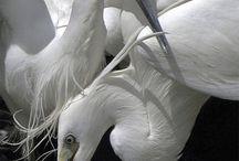 Birds OMG Birds / by Alyx Dellamonica