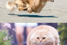 I don't care who you are...this has gotta make you laugh!!! / by Kelly Larsen