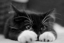 Animal Love / by Baylee Shaffer