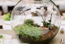 Ideas: Niemann Anschutz Wedding / Date: April 8, 2015 - Location: Central Florida - White Flowers, Spring Greens & Dark Wood Browns / by Chelsea Niemann