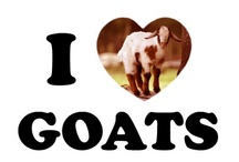 Goats / by Barbara Ross-Rattee