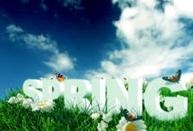 Spring Cleaning & Organizing / by Dawn Dunnivant