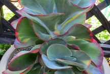 Succulents / by Sensational Succulents