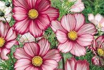 In Bloom / by nicole vacura