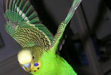 Birds in flight / by IMW WMI