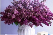 Purple Passion *Bonnie's Heart and Home* / Purple is my favorite color! / by Bonnie's Heart and Home & Valor Virtual Solutions