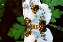 Moths-Butterfly / by Kay Winston