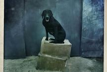everything dog / by Brooklyn Smith