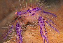 Sea Creatures/Facinating Animals / by Trinnie Velasquez