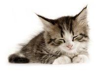 Awww Kitten / by Katherine
