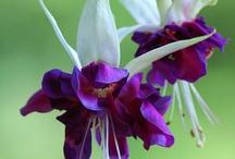 Beautiful Flowers / by Josie Goytisolo