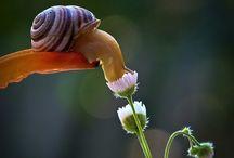 Snails / by Sarah Rubertus