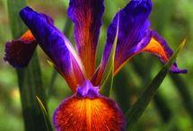 Pretty Flowers / by Andi Quinn