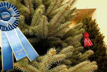 Christmas Trees and More / by Ron Wolford