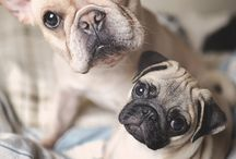 cute animals / by Cheryl Baer